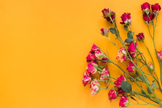 Rode anjerbloemen met oranje exemplaar ruimteachtergrond Gratis Foto