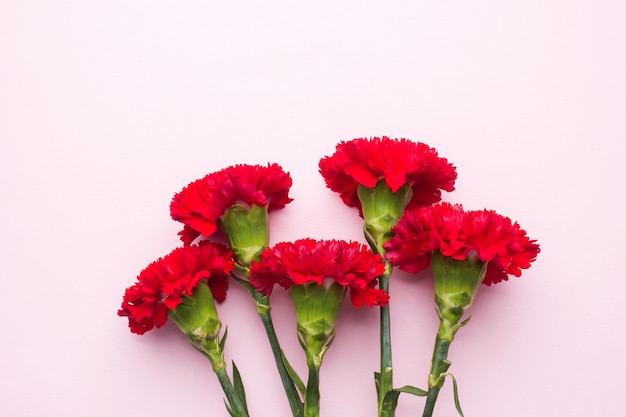 Rode anjers op roze achtergrond met kopie ruimte. moederdag kaart, valentijnsdag. Premium Foto