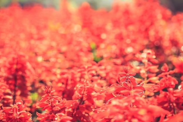 Rode bloemen Gratis Foto