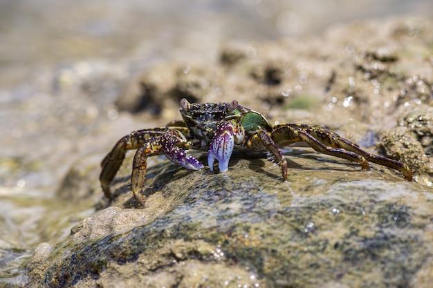 Rode en groene krab op rots Gratis Foto