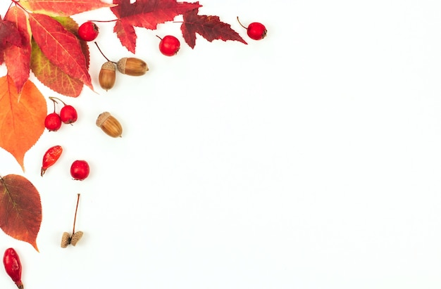 Rode en oranje herfstbladeren, eikels en kleine rode appels op wit. Premium Foto