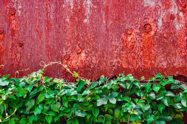 Rode grunge geroeste metalen textuur muur achtergrond met groen blad Premium Foto