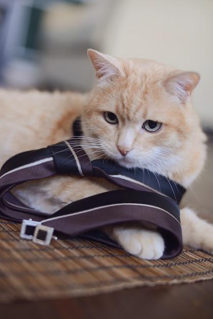 Rode kat in een mannen stropdas met manchetknopen liggend in de kamer Premium Foto