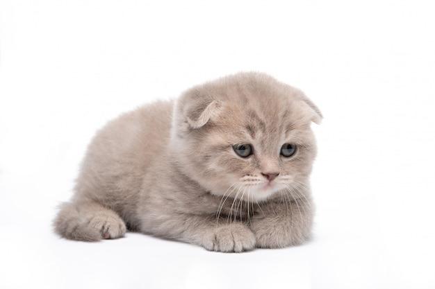 Rode kitten ligt op een witte muur Premium Foto
