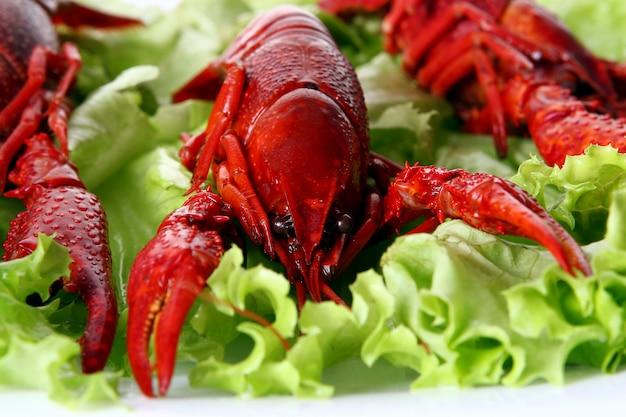 Rode klauw met groene salade Gratis Foto
