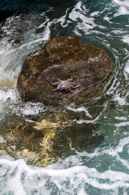 Rode krab op een rots met de zee die in de rots verplettert Premium Foto