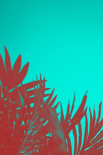 Rode palmbladen op turkooizen achtergrond Gratis Foto