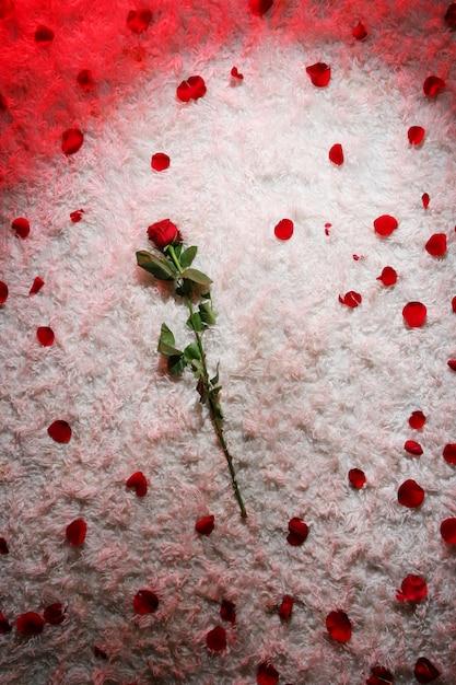 Rode roos en bloemblaadjes tapijt Gratis Foto