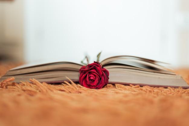 Rode roos in een open boek Gratis Foto