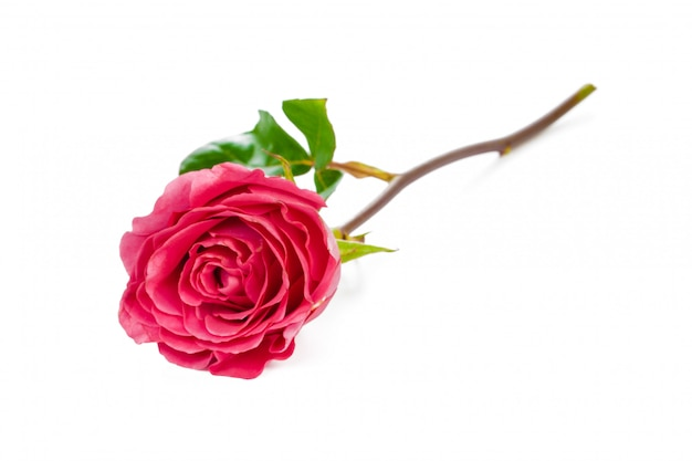 Rode roos met groene bladeren geïsoleerd op wit Premium Foto