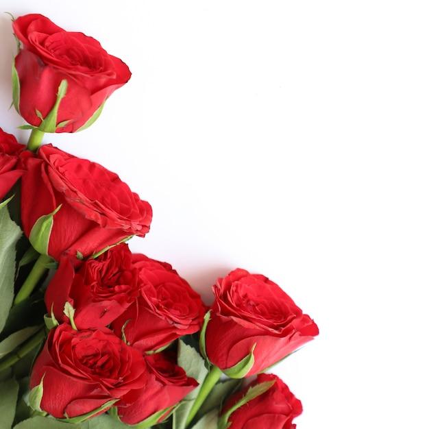 Rode roos multifunctionele achtergrond voor verjaardag, bruiloft, verjaardag of andere vieringen Gratis Foto