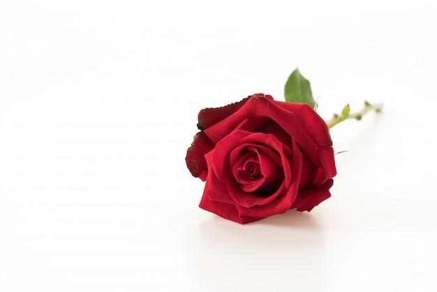 Rode roos Gratis Foto
