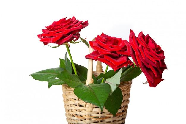 Rode rozen in een rieten mand. verse bloemen. Premium Foto