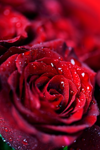 Rode rozen Premium Foto