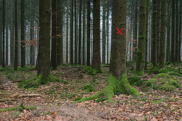 Rode target op een boom in het bos Gratis Foto