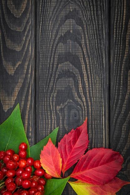 Rode viburnumbessen en herfstbladeren Premium Foto
