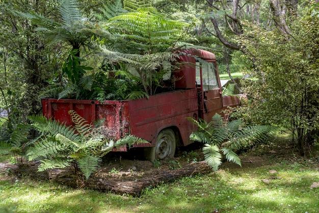 Roestige rode auto liggend verlaten in een bos achtergrond omgeven door bomen Gratis Foto