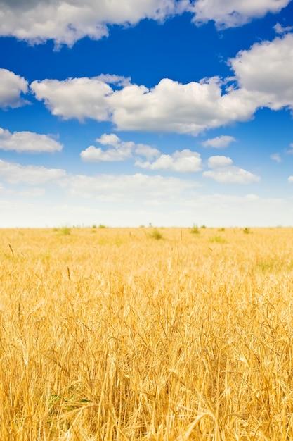 Rogge veld en bewolkte hemel Gratis Foto