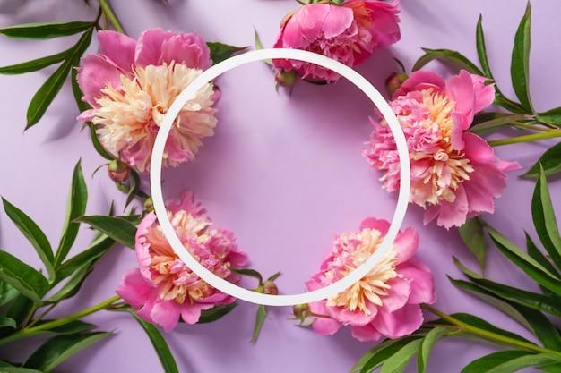 Rond frame. roze pioenrozen op paarse achtergrond Premium Foto