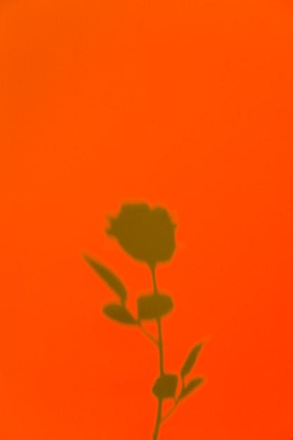 Rose schaduw op een oranje achtergrond Gratis Foto