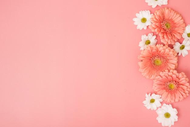 Roze achtergrond met madeliefjes en gerberabloemen Gratis Foto