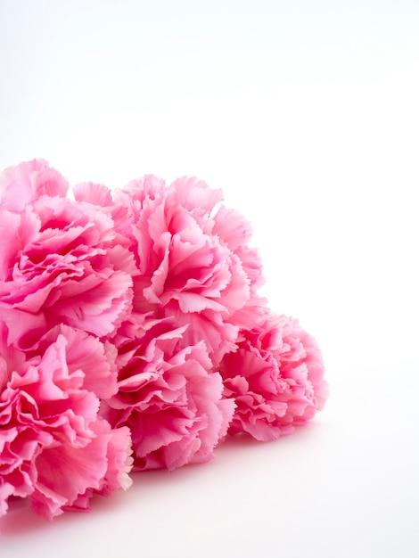 Roze anjersbloem voor moederdag Premium Foto