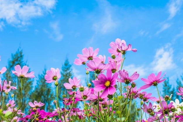 Roze bloem bloeien in het veld bloeien in de tuin Premium Foto