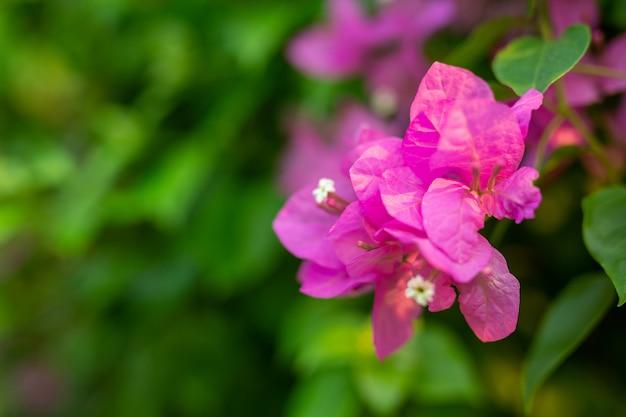 Roze bloemachtergrond. Gratis Foto
