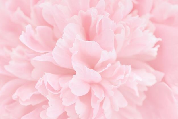 Roze bloemblaadjes met wazig focus Premium Foto