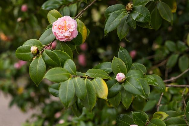 Roze bloemen groeien op groene takjes met druppels Gratis Foto