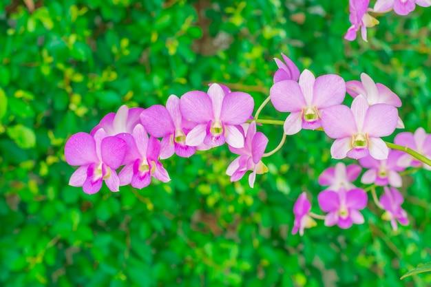 Roze bloemen in het bos. Premium Foto