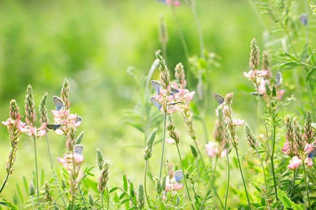 Roze bloemen op groene achtergrond met blauwe vlinders, natuurlijke mooie achtergrond Premium Foto
