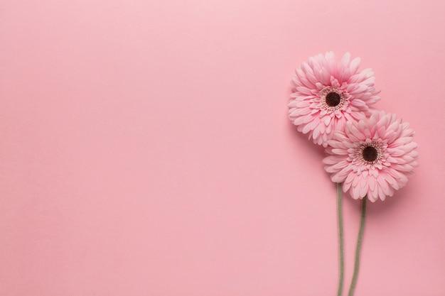 Roze bloemen op roze Gratis Foto