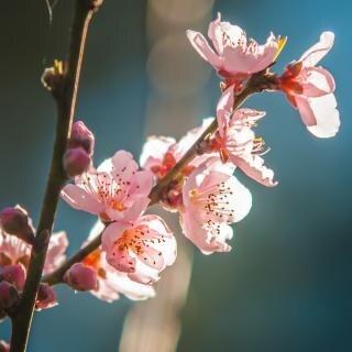 Roze bloesems bloemen Gratis Foto