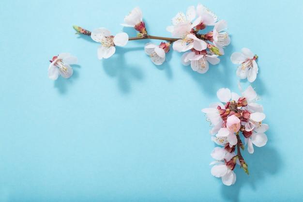 Roze kersenbloemen op blauwe achtergrond Premium Foto