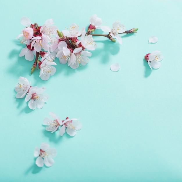 Roze kersenbloemen op groene achtergrond Premium Foto