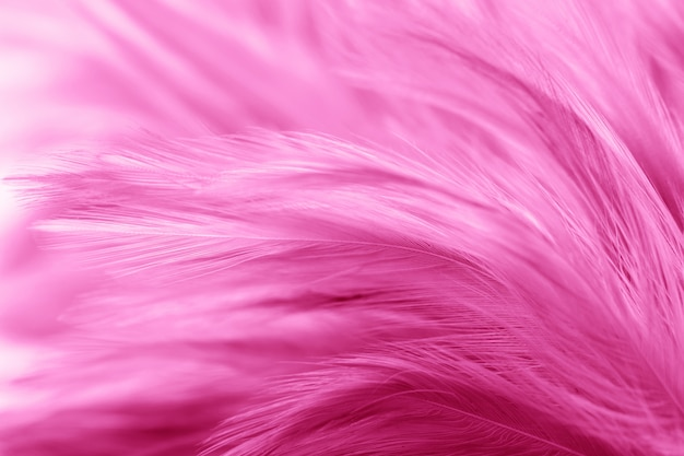 Roze kippenveren in zacht en vervagen stijl voor achtergrond Premium Foto