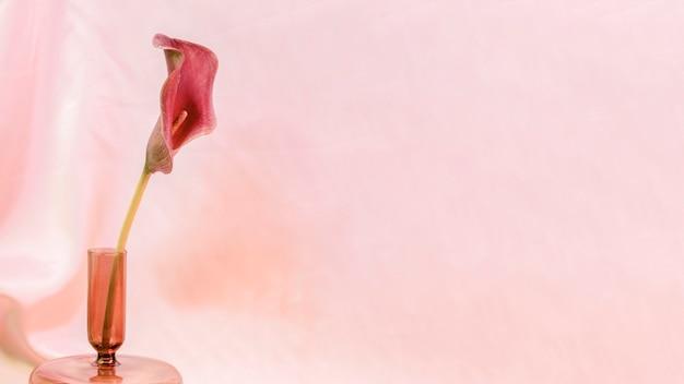 Roze leliebloem in een vaas op roze Gratis Foto
