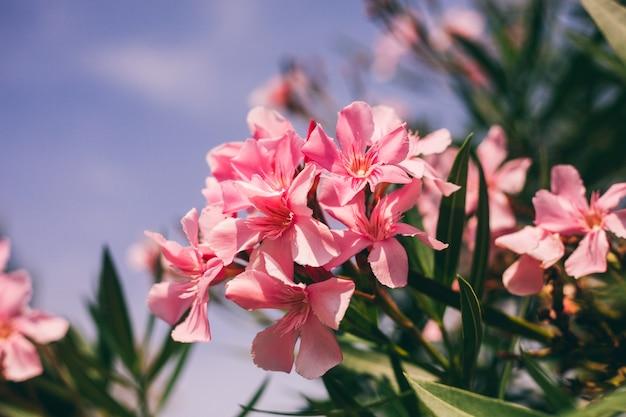 Roze macrobloem op hemel Premium Foto