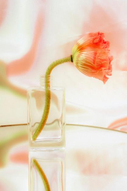 Roze papaverbloem in een helderglazen vaas Gratis Foto