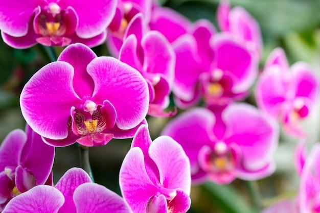 Roze phalaenopsis orchidee bloem Gratis Foto