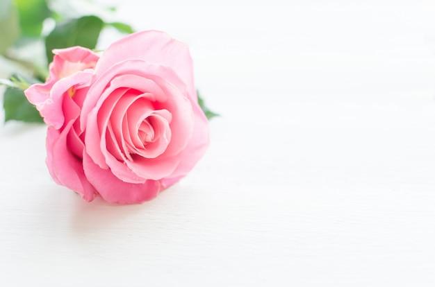 Roze roos over witte houten plank. moederdag of valentijnsdag Premium Foto