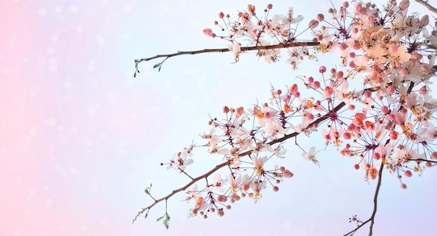 Roze sakura-bloemen Premium Foto