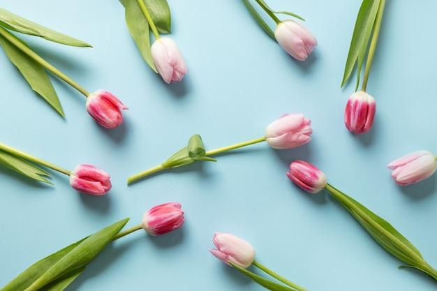 Roze tulpen op een blauwe achtergrond. Premium Foto