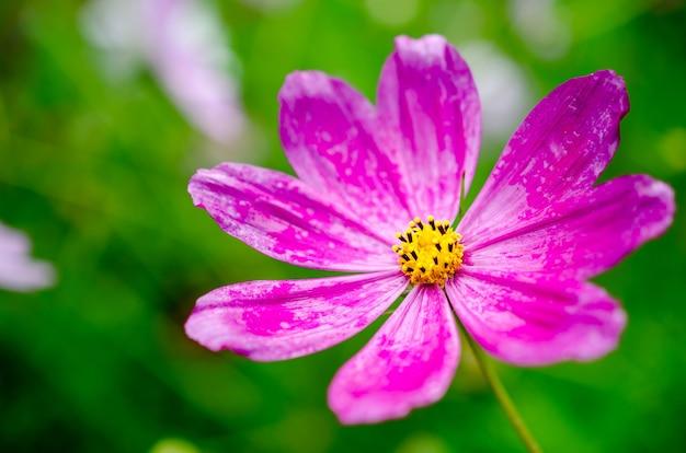 Roze wilde bloem Premium Foto