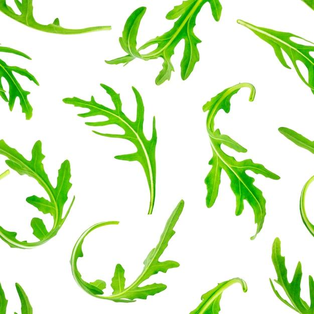Rucola naadloos patroon. geïsoleerd op witte achtergrond Premium Foto