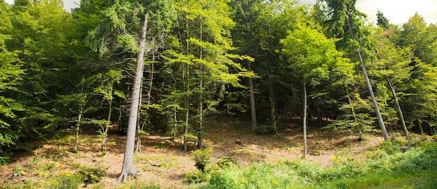 Rustig alpien boslandschap Premium Foto
