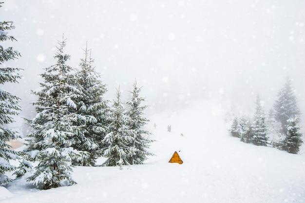 Ruwe winterlandschap prachtige besneeuwde sparren staan tegen een mistig bergachtig gebied op een koude winterdag Premium Foto