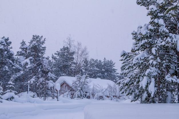 's avonds winter bos. klein huis in de diepte. alles wordt overspoeld met sneeuw. sneeuwval Premium Foto