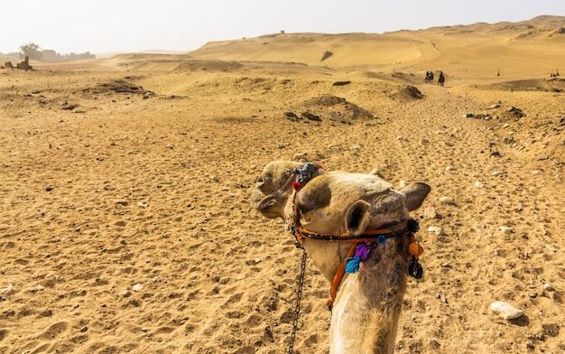 Sahara gezien door een kameelrijder egypte Premium Foto